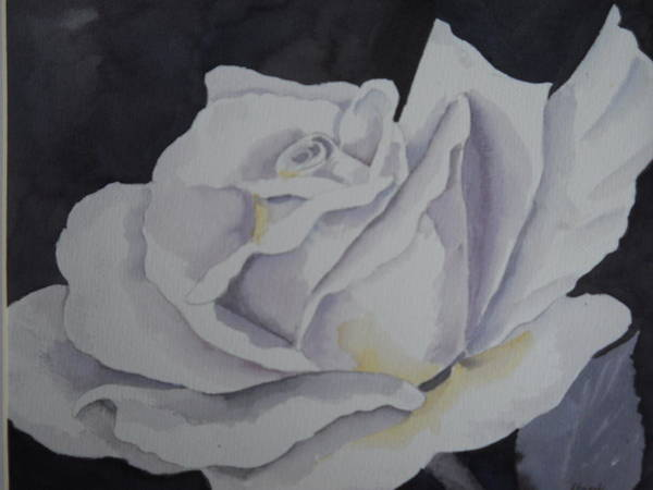 Painting - White Rose by Audrey Bunchkowski