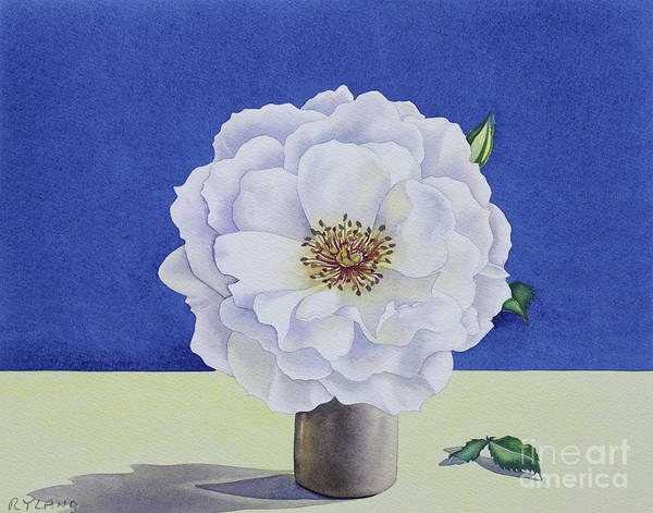 Wall Art - Painting - White Rose by Christopher Ryland