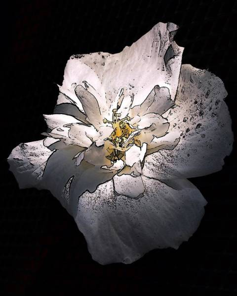 White Rose Of Sharon Art Print