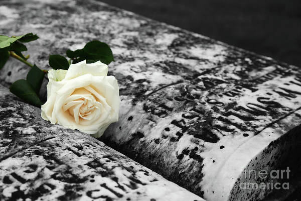 Photograph - White Rose On Grave For Memorial Day by James Brunker