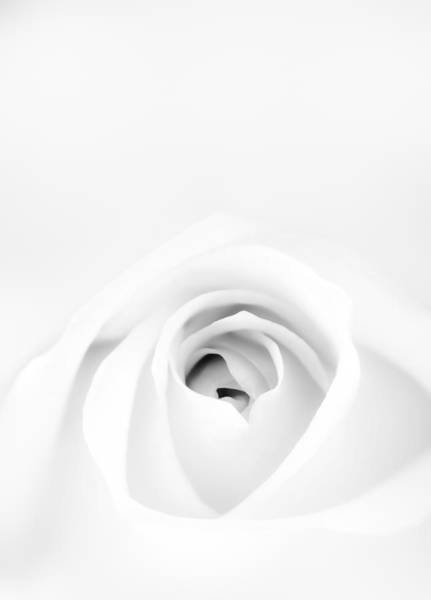 Mono Photograph - White Rose by Scott Norris