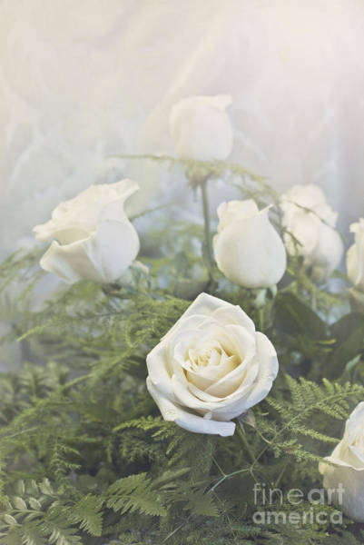 Photograph - White Roses by Cindy Garber Iverson