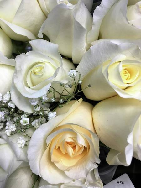 Photograph - White Roses by Marian Palucci-Lonzetta