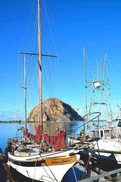 Morro Bay Painting - White Sail Boat Morro Rock  by Barbara Snyder
