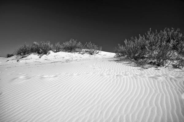 Photograph - White Sands 5 by Lou  Novick