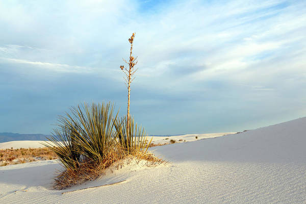 Photograph - White Sands Evening by Nicholas Blackwell
