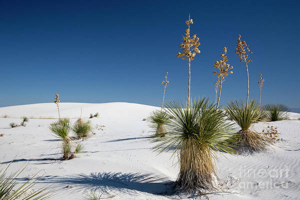 Photograph - White Sands by Jim West