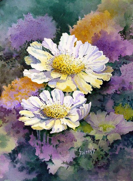 Painting - White Scabious by Sam Sidders