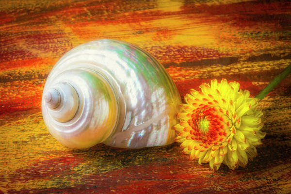Wall Art - Photograph - White Shell And Dahlia by Garry Gay