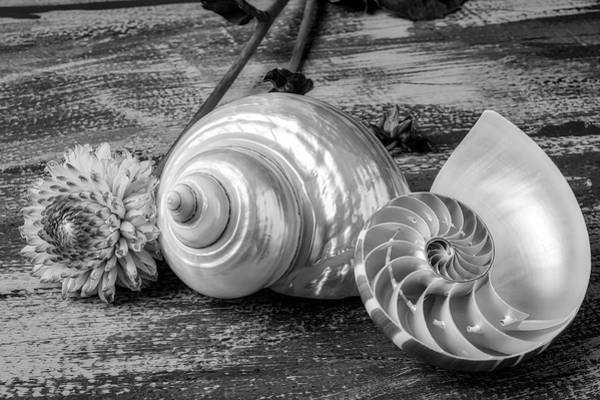 Wall Art - Photograph - White Shell With Dahlia And Nautilus Shell by Garry Gay