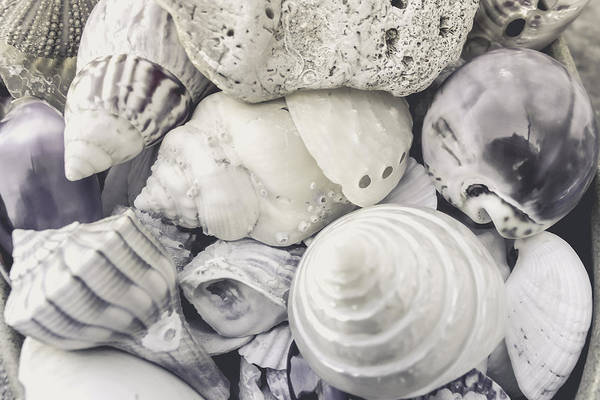 Wall Art - Photograph - White Shells by Colleen Kammerer