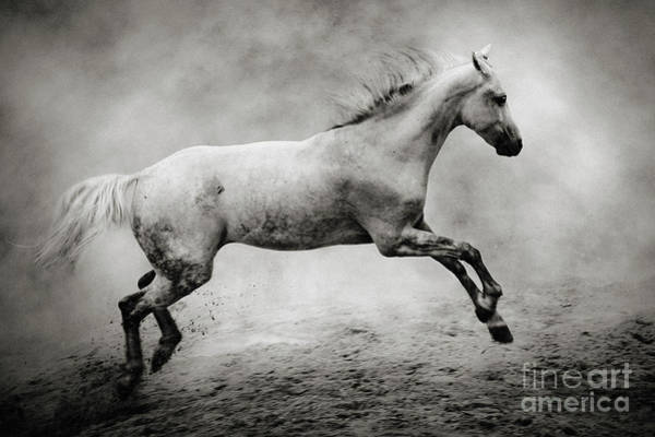 Photograph - White Stallion by Dimitar Hristov