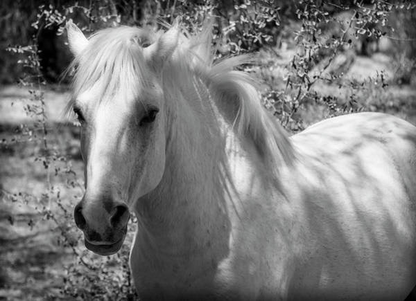 Photograph - White Stallion by Teresa Wilson