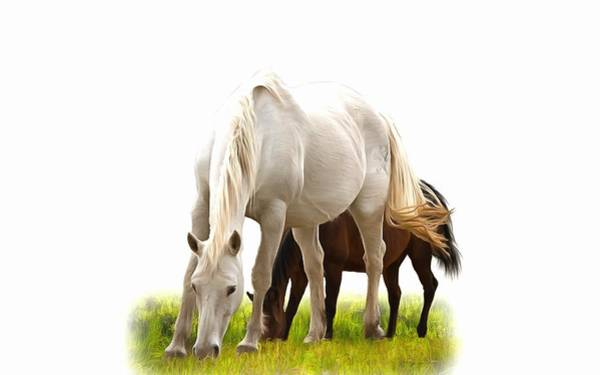 Photograph - White Stallion With Mare by Studio Artist