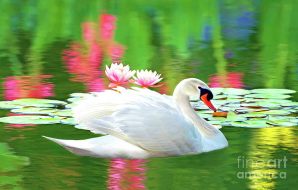 White Swan Photograph - White Swan by Laura D Young