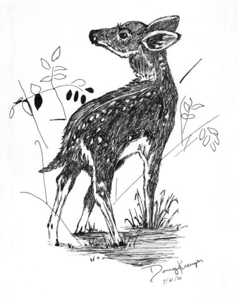 White Tailed Deer Drawing - White-tail Fawn -pen And Ink by Doug Kreuger