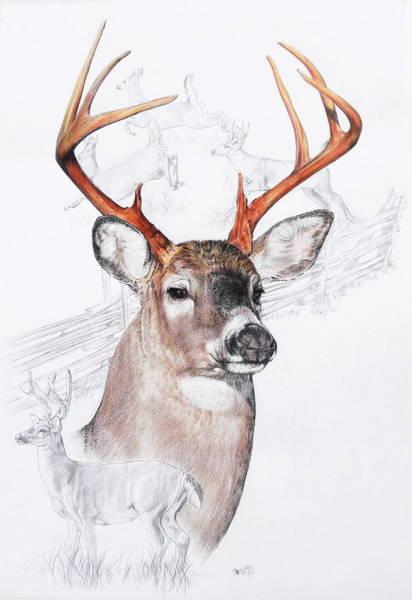 White-tailed Deer Art Print