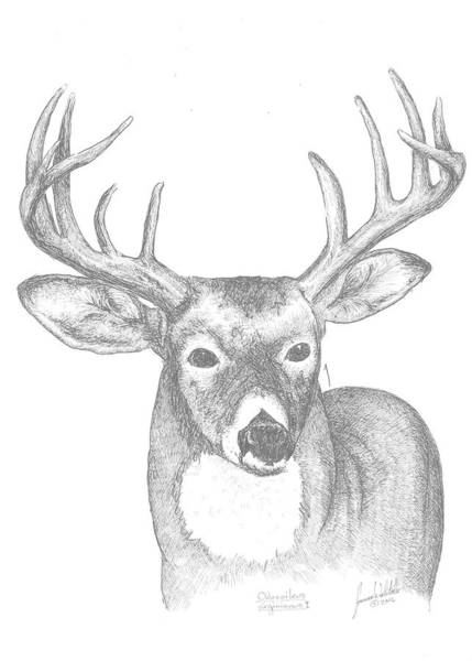 White Tailed Deer Drawing - White Tailed Deer I by Joanna Walitalo