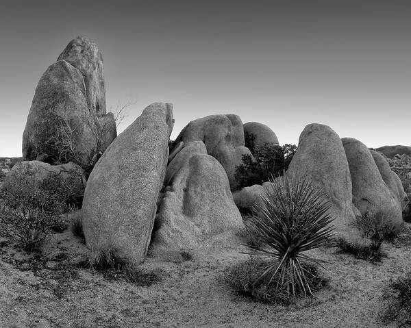 Photograph - White Tank Garden - Black White by Paul Breitkreuz