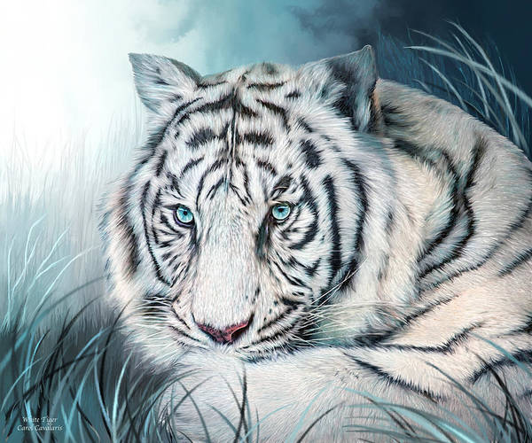 White Cat Mixed Media - White Tiger - Spirit Of Sensuality by Carol Cavalaris