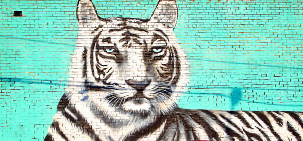 Photograph - White Tiger by Newwwman
