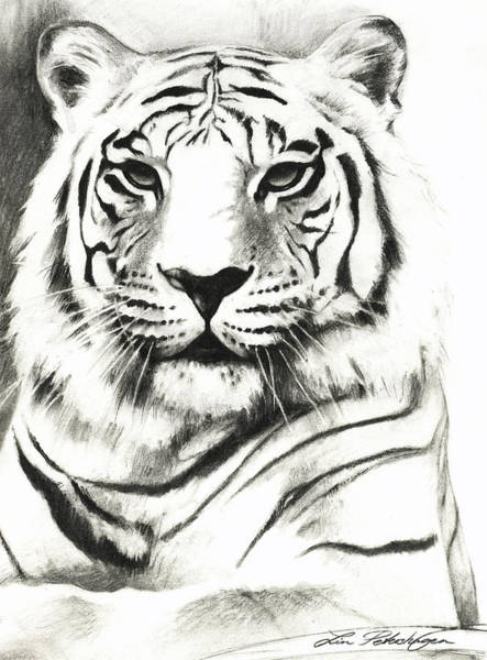 White Tiger Drawing - White Tiger Portrait by Lin Petershagen