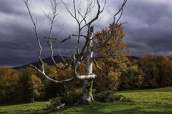 Photograph - White Tree by Garry Gay