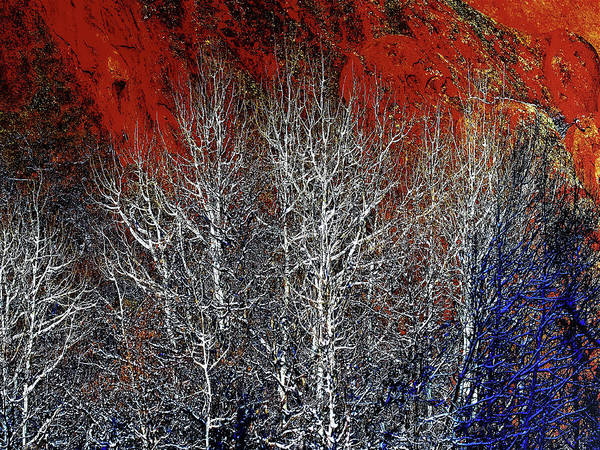 Digital Art - White Trees  Red Rocks  by OLena Art - Lena Owens