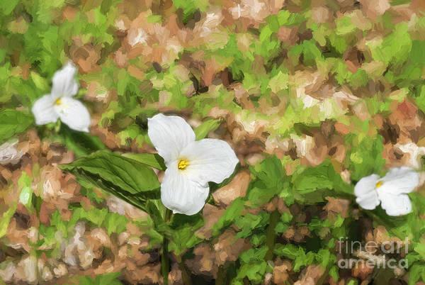 Photograph - White Trillium Flowers by Les Palenik
