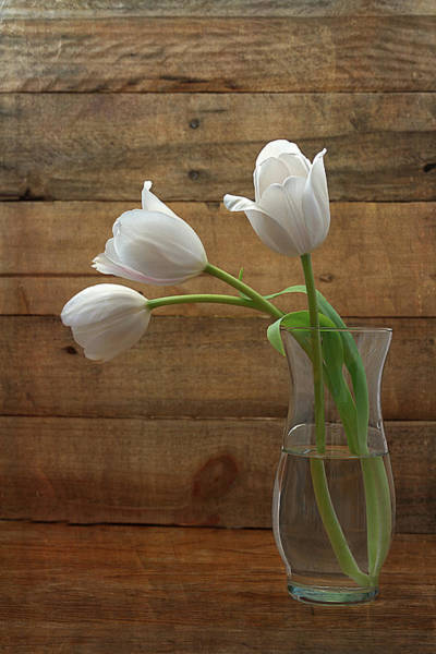 Photograph - White Tulips In Glass Vase by Kim Hojnacki