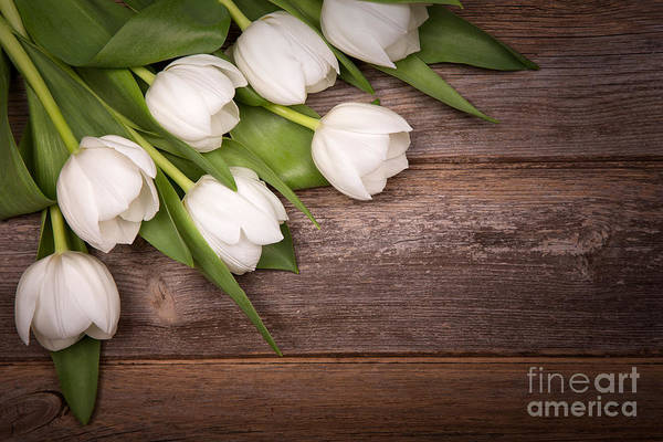 Wall Art - Photograph - White Tulips by Jane Rix
