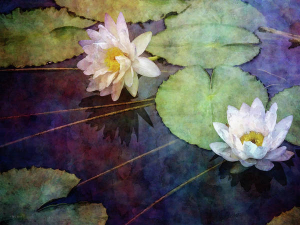 Photograph - White Water Lilies 4817 Idp_2 by Steven Ward