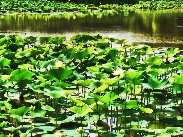 Northern India Photograph - White Water Lotus Garden by Shawna Rowe