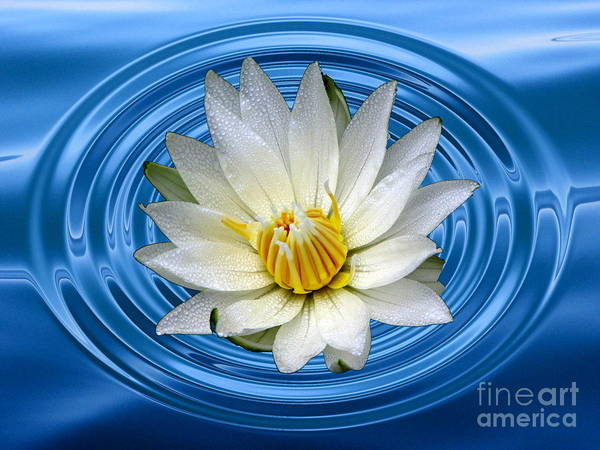 Photograph - White Waterlily With Dewdrops And Ripples by Rose Santuci-Sofranko