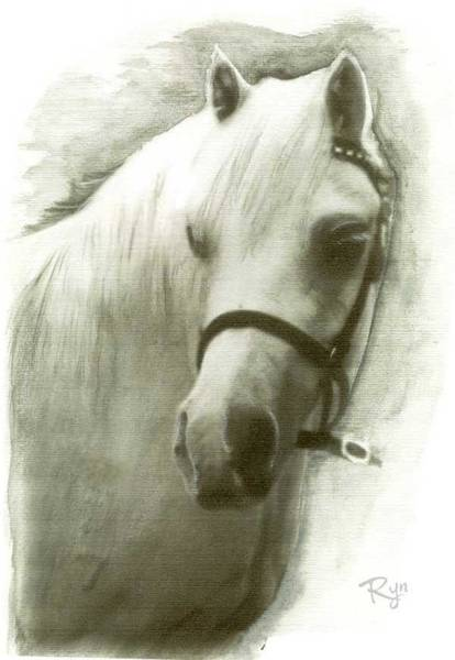 Drawing - White Welsh Pony by Ryn Shell