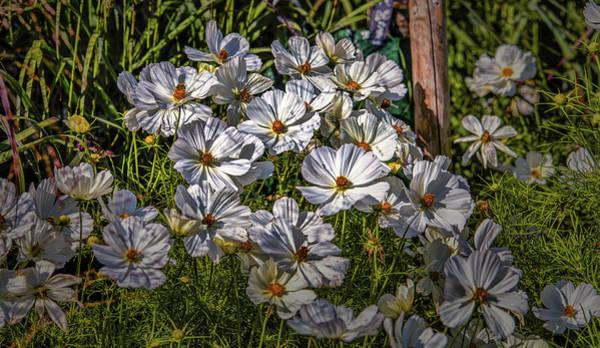 Photograph - White, White, White #h8 by Leif Sohlman