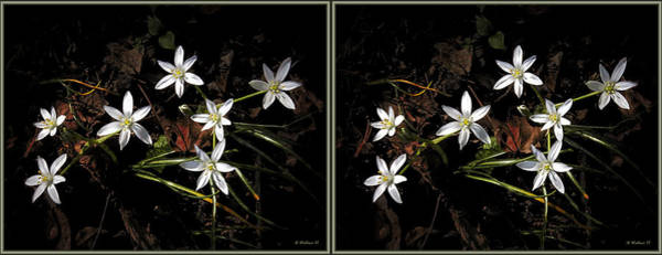 Stereoscopy Digital Art - White Wildflowers - 3d Stereo X-view by Brian Wallace