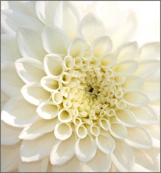 Photograph - Whiteflow by Steven Robiner