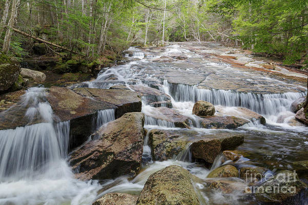 Photograph - Whitehouse Brook - Franconia Notch, New Hampshire by Erin Paul Donovan