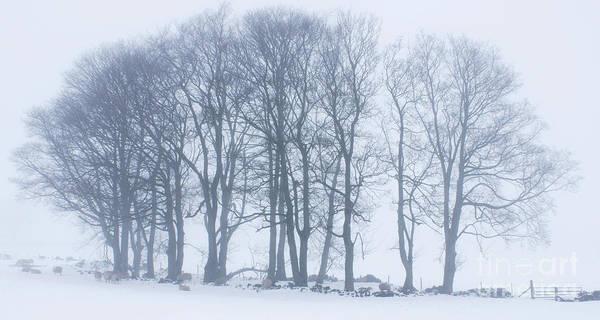 Photograph - Whiteout by David Birchall