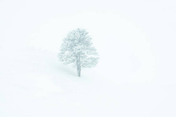 Photograph - Whiteout by Fiskr Larsen