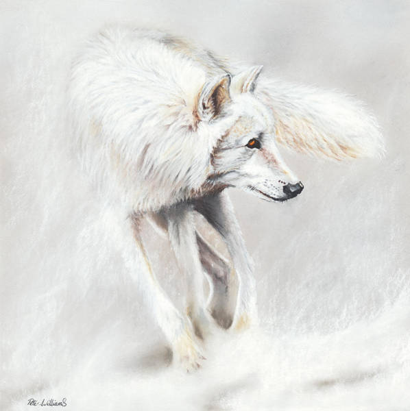 Drawing - Whiteout by Peter Williams