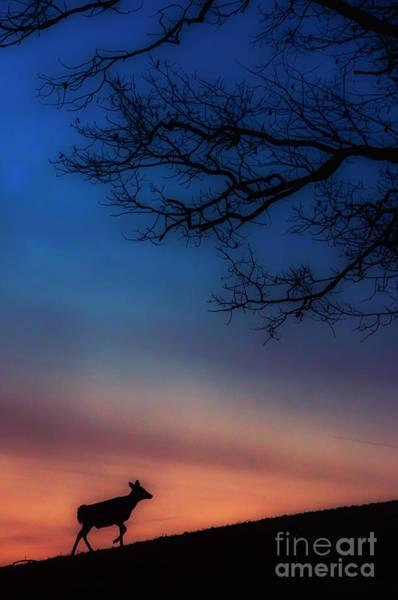 Wall Art - Photograph - Whitetail At Dawn by Thomas R Fletcher