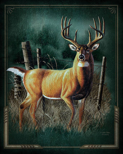 Antlers Painting - Whitetail Deer by JQ Licensing