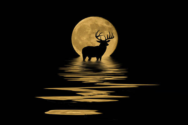 Reflections Mixed Media - Whitetail Deer In The Moonlight by Shane Bechler
