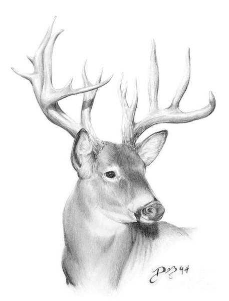 Whitetail Drawing - Whitetail Deer by Larry-DEZ- Dismang