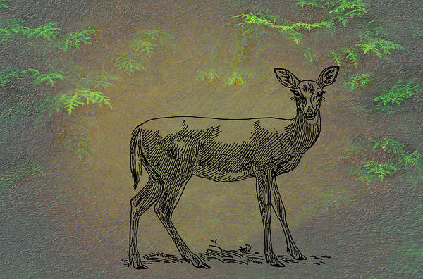 Wall Art - Mixed Media - Whitetail Doe by Movie Poster Prints