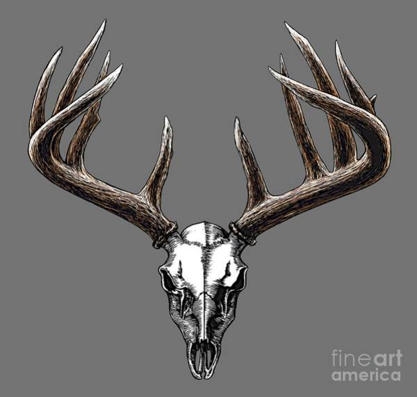 Black Buck Painting - Whitetail Skull by Rob Corsetti