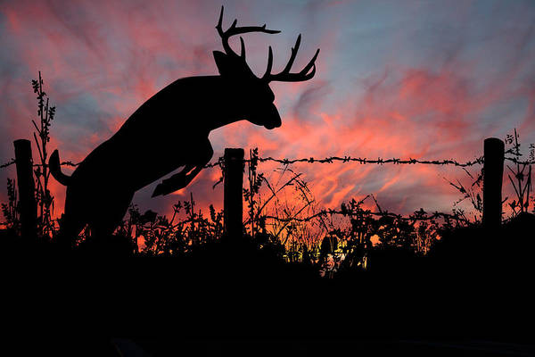 Hunting Season Digital Art - Whitetail Sunset by Dustie Meads