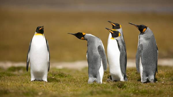 Penguin Wall Art - Photograph - Who Has Been? by Joan Gil Raga